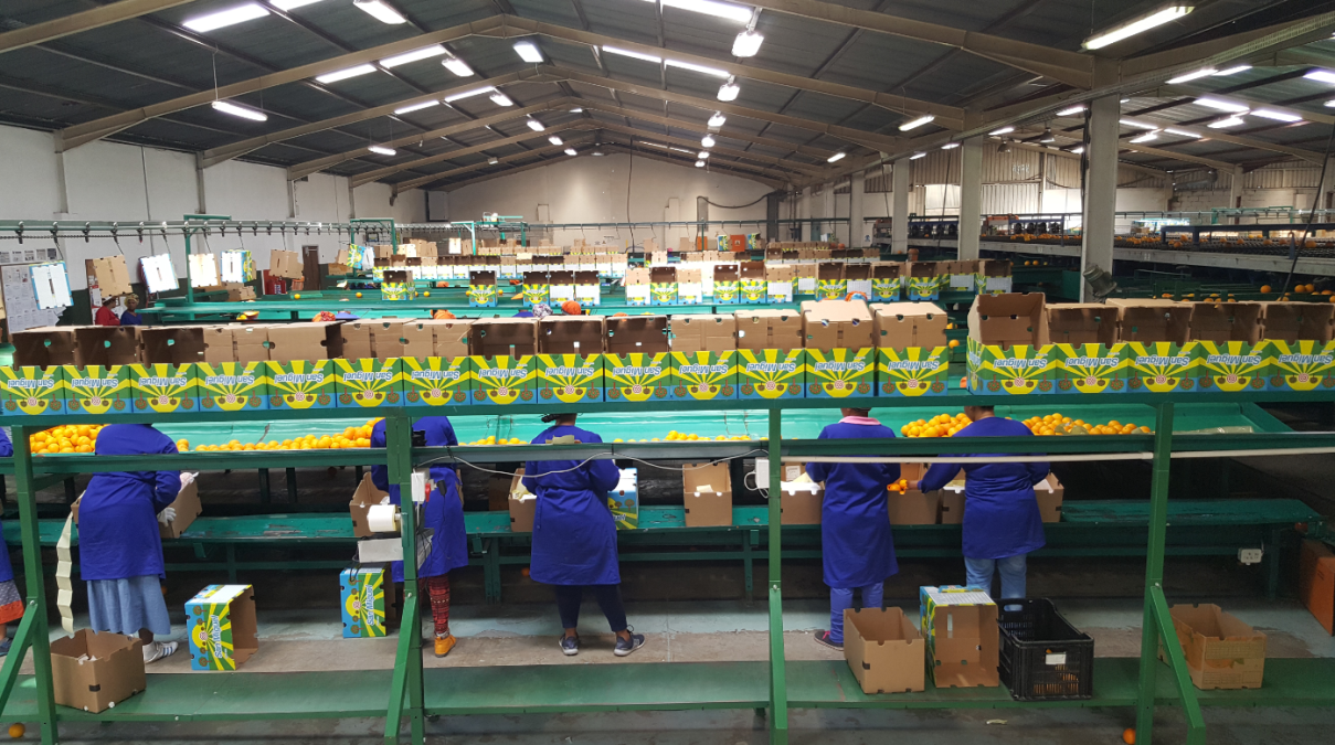 Ponders End upgrade their packhouse software to Paltrack's PALPACK PRO
