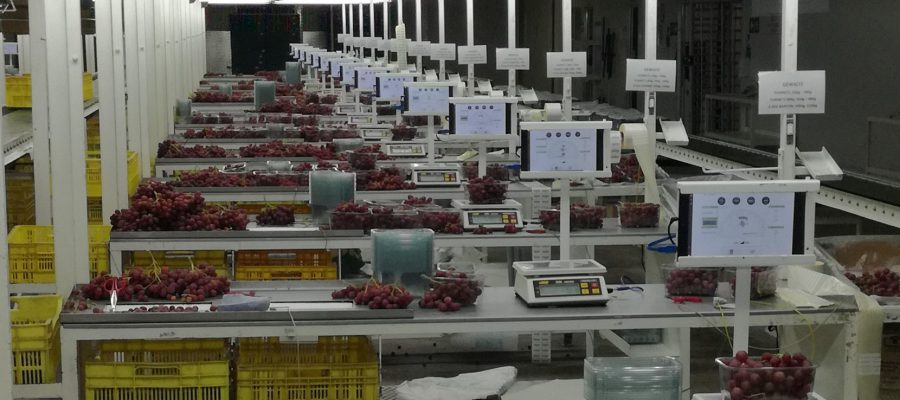 Vendutiekraal partner with Paltrack on Grape Packhouse Solution