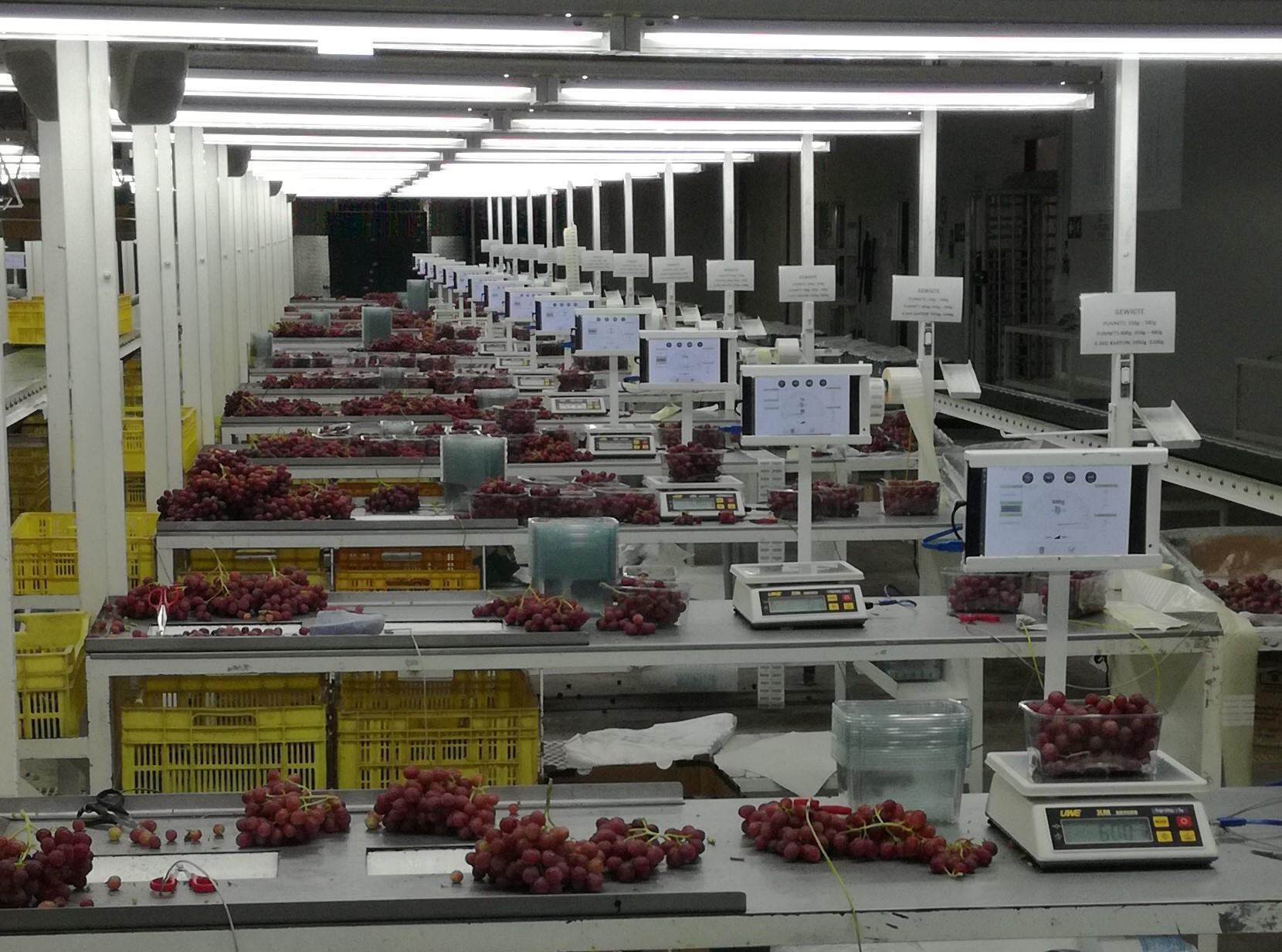 Vendutiekraal partner with Paltrack on Grape Packhouse Solution