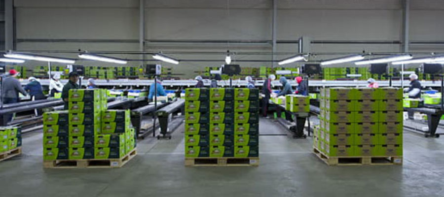 PALPACK Includes Carton Management System