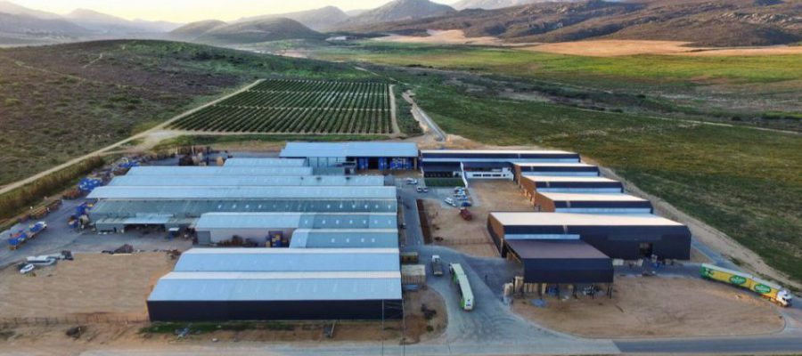 MOUTON CITRUS GROWS THEIR STRATEGIC PARTNERSHIP WITH PALTRACK